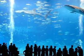 -【あさチャン】この夏行きたい水族館!名古屋港水族館・マリホ水族館・サンシャイン水族館