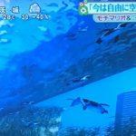 【ズムサタ】家族で楽しめるスポット&グルメ★空飛ぶペンギン・溶けないアイス・フリフリチキンなど