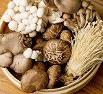 -【ゲンキの時間】食物繊維で健康に!第三の食物繊維レジスタントスターチ&オリゴ糖を上手に摂る方法!