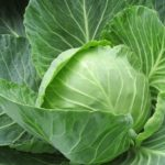 【あさイチ】キャベツののりのりサラダの作り方!和田明日香さんのレシピ!