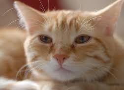 【スッキリ】ねこじゃすりの通販・お取り寄せ方法!猫がとろける専用やすり(2月22日)