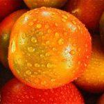 【あさチャン】トマトの甘酒ピクルスの作り方!甘酒のアレンジレシピ