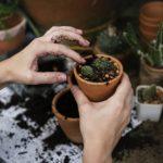 【スッキリ】簡単ガーデニングのやり方!寄せ植え&サボテン!カリスマ主婦紫雨さんが伝授!