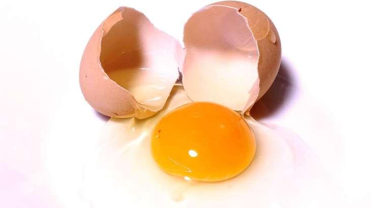 【ごごナマ】だし巻き卵の作り方!島谷宗宏さんの行楽弁当レシピ【おいしい金曜日】
