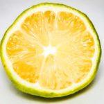 【ジョブチューン】柚子と甘酒のスムージーの作り方!骨粗鬆症予防にに良い薬味レシピ-