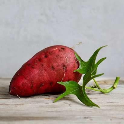 【林修の今でしょ講座】さつまいもの健康効果!焼き芋の美味しいレシピも紹介