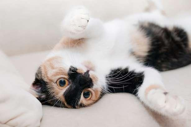 スッキリ 猫