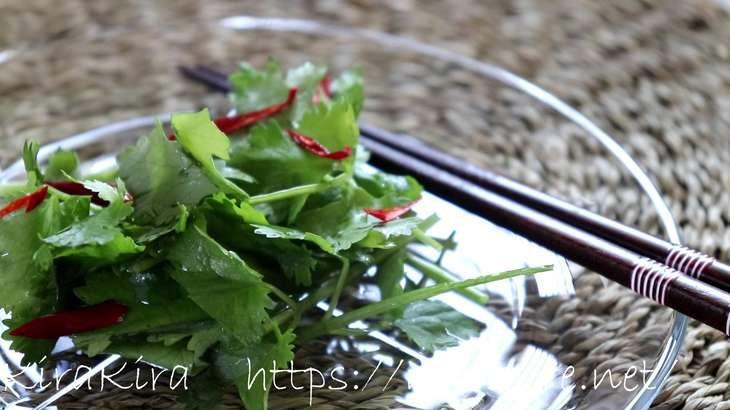 【男子ごはん】香菜としらすのエスニックサラダの作り方。パクチーたっぷり!蒼井優さんと秋のおつまみレシピ(9月22日)