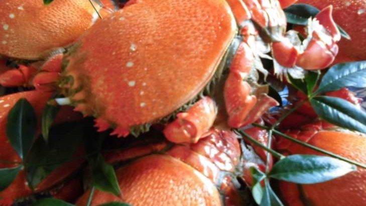 【青空レストラン】アサヒガニの通販・お取り寄せ情報。宮崎県串間市の極上蟹!11月28日
