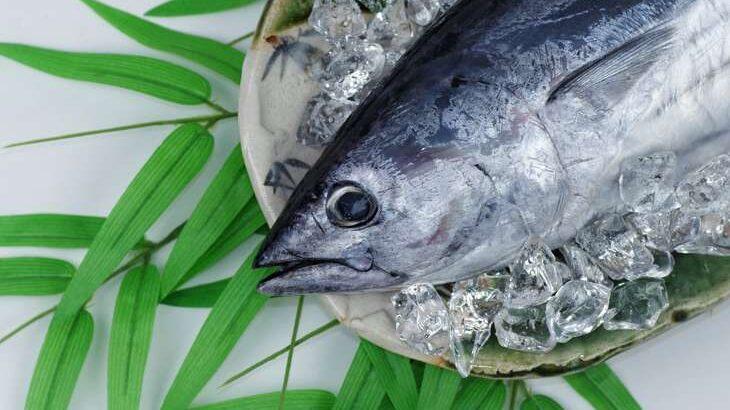 【マツコの知らない世界】さかなクン厳選!春の美味しいお魚の世界。東京湾の魚まとめ(4月13日)