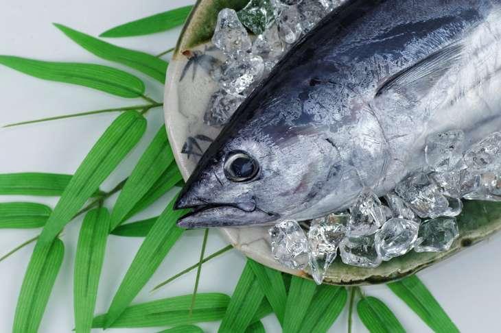 マツコの知らない世界さかなクン厳選東京湾春の絶品お魚
