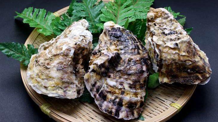 【青空レストラン】岩ガキ 夏珠なつみの通販・お取り寄せ。京都の特大牡蠣(8月14日)
